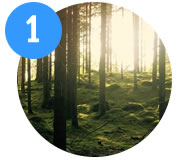 1-woodland-walk